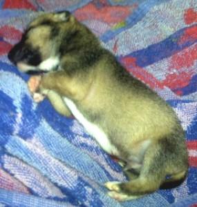 Jasper, the Pup
