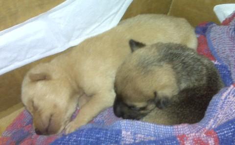Foster Pups Nov 22, 2008