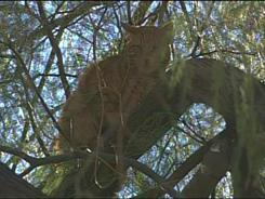 Cat Stuck in Phoenix Police Officers Tree