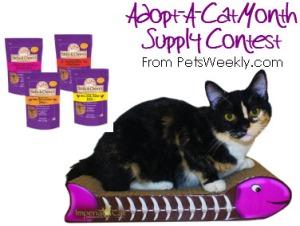Adopt A Cat Contest